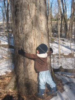 My son Nathaniel thanking the big sugar maple with a hug
