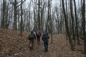 Hiking the Maple Forest