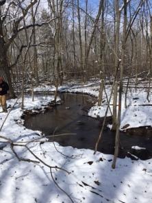 A creek through the woodland