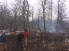 Removing the unwanted tree species from the savannah