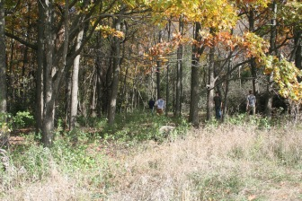 Removal of buckthorn allows more sunlight to reach small oak and hickory seedlings