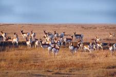 american-prairie-reserve