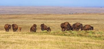 american-prairie-reserve600x600