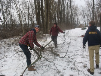 Removing Buckthorn from a Tall Pines Conservancy Preserve