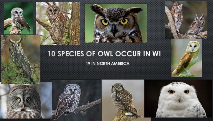 q0-species