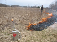 "Conducting a controlled prairie burn starts with ""back-burning"""
