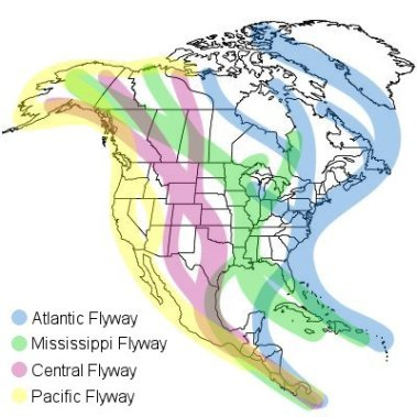 north-america-migration-flyways