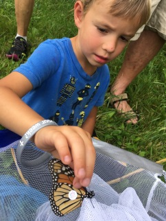 Tagging a monarch butterfly