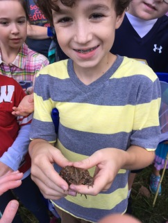 Finding an American Toad