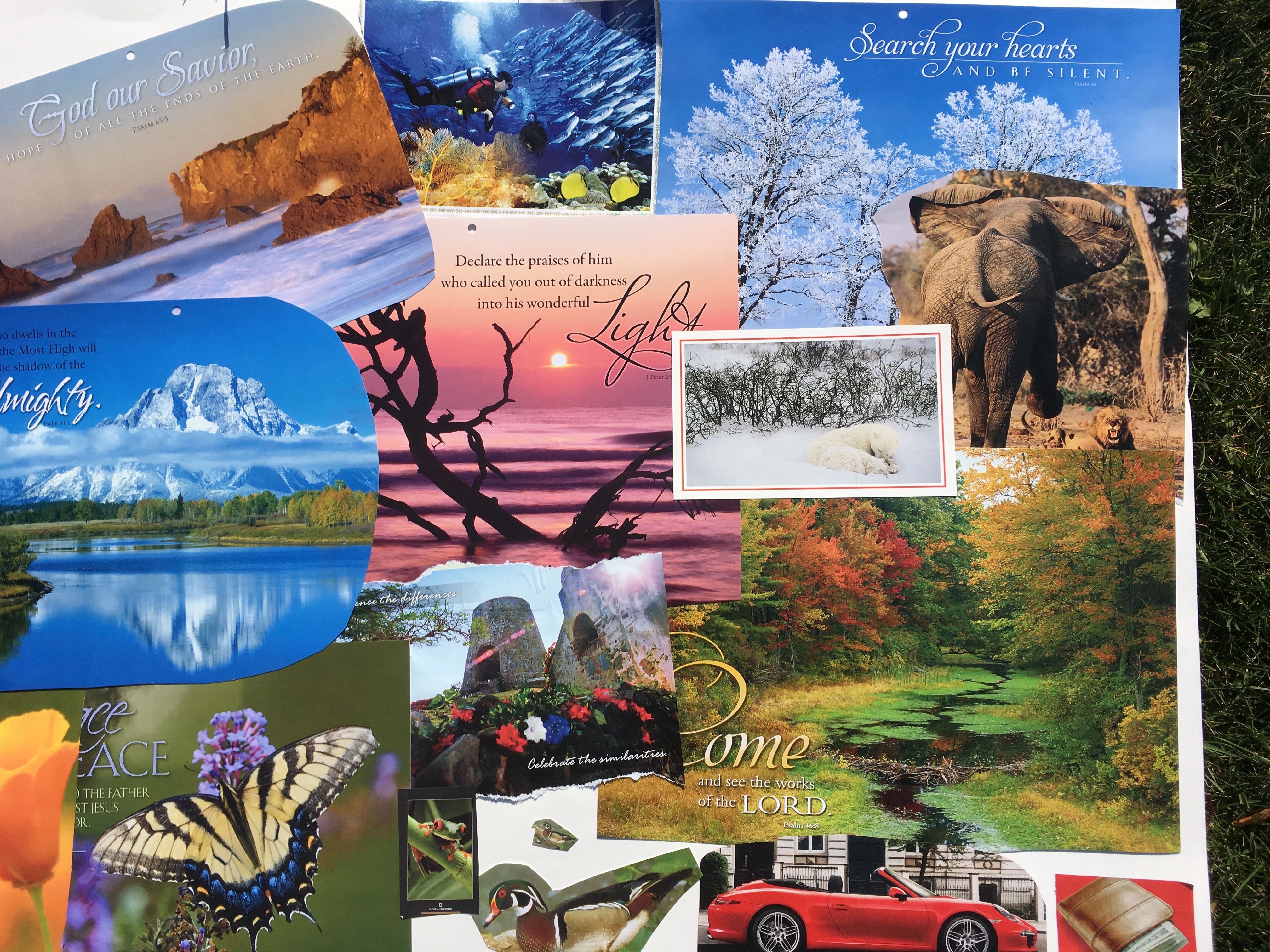 Image result for care for god's creation collage