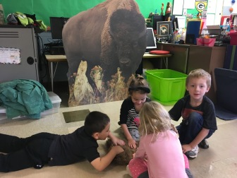 Learning about Bison in WI
