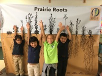 Learning about amazing prairie roots