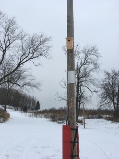 A Nest Box we put up at the HH Ski Club