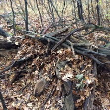 An example of a winter den