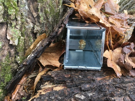The sherman live traps we use for our small mammal survey's