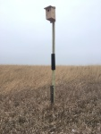 An American Kestrel Nest box we placed at Daniel Boone Conservation League